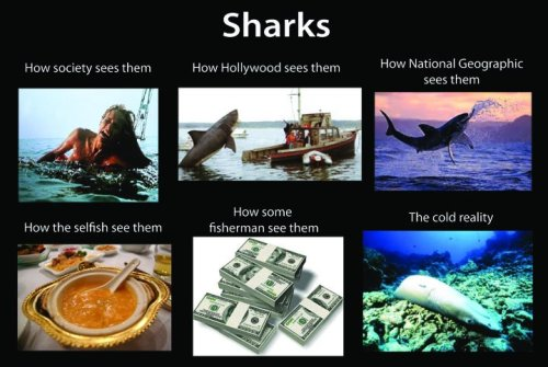 mad-as-a-marine-biologist:  How do you see sharks?