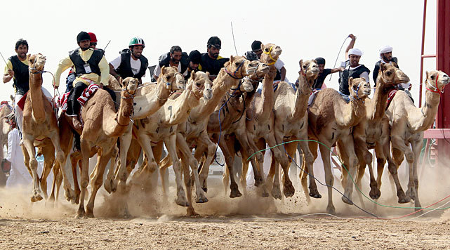 Jockeys compete in a traditional camel race during the Sheikh Sultan Bin Zayed Al-Nahyan Camel Festival, which was held in the outskirts of Abu Dhabi on Thursday. (KARIM SAHIB/AFP/Getty Images)