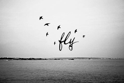 I wish I could fly.