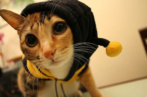 If she hasn't seen this, Hellimbee would surely love it? A cat dressed as a bee? Funn.