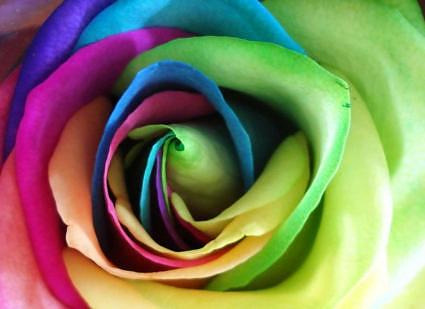 Wedding Flower Trend :: Rainbow Roses | ChezWedd on We Heart It. http://weheartit.com/entry/23061806