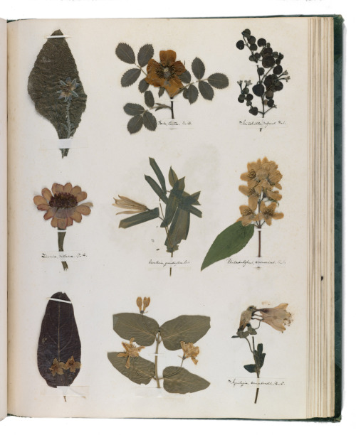rebecca-michelle:  Emily Dickinson's herbarium  Oh, two of my favorite things: Emily Dickinson and pressed wildflowers!