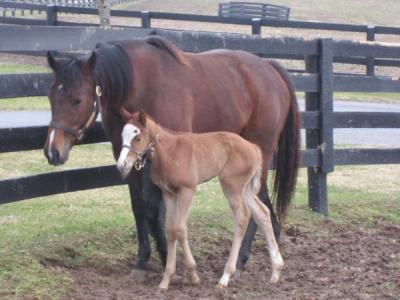 2012 foals: Champion She Be Wild and her Tapit baby