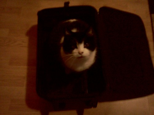 Lololol my cat in my suitcase. He wants to go to portland with me!