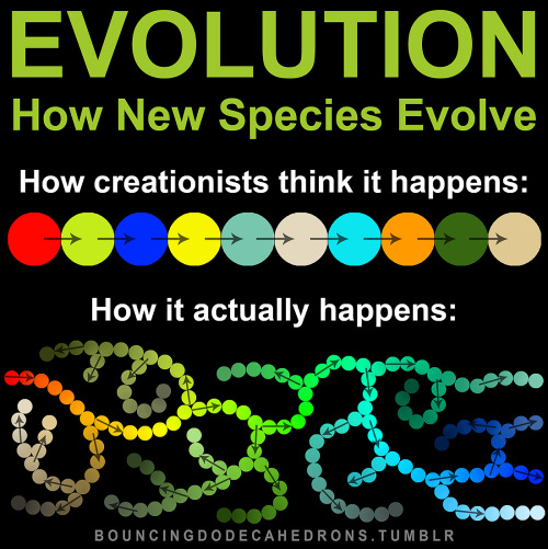 How evolution really happens.