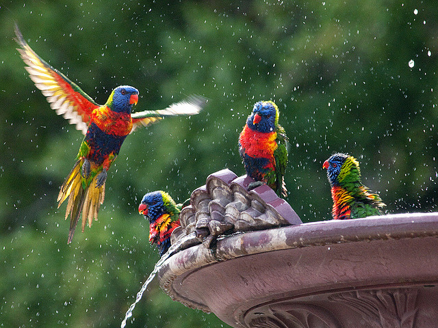 magicalnaturetour:  Bird Bath by Julian Kaesler on Flickr. :)