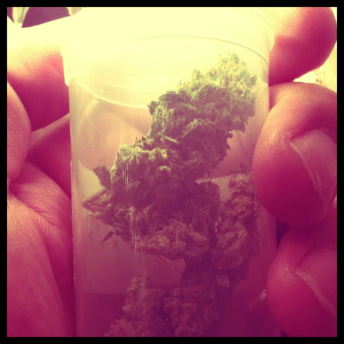 J1. #weed #j1 #sativa #marijuana #420 #thegardeners #stoners #nuggetry