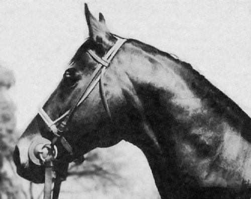Grog 1933 son of Hard Tack A mildly successful claimer, Grog was purchased by Charles Howard to be used as a body double for his half-brother, Seabiscuit. Trainer Tom Smith would often send Grog out in place of Seabiscuit for workouts to fool reporters and rail birds