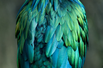 ruineshumaines:  Beautiful Bird (by rjswilson)