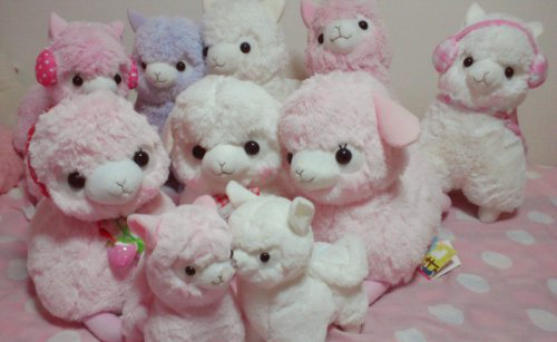 kenyadoll:  Memorial Day Alpaca Family Photo!