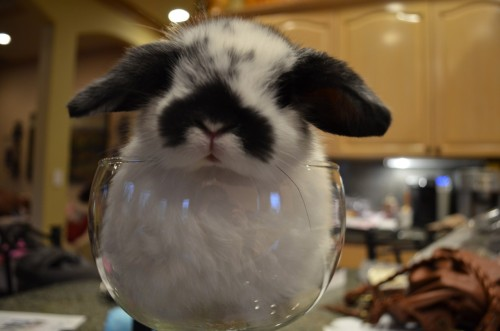 dailybunny:  Thanks, moanalittlelouder!