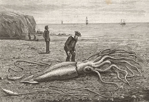 A dead giant squid washed ashore in Fortune Bay, Newfoundland in 1871.
