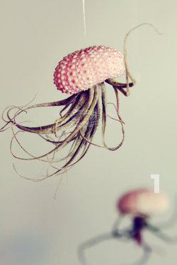 dishranawaywithspoon:  floweringgargoyle: Jelly Fish Air Plant.