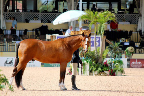 equestriansport:  photo credit- Taylor Burns