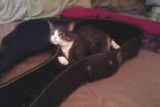 get out of there cat. that is not a bed and you are not a guitar. all wrong cat, all wrong.