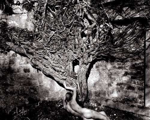 Naked Vine, 1985 by John Swannell *