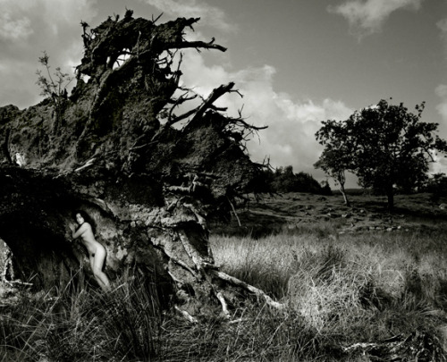 Becky in uprooted tree, 1984 by John Swannell [more]