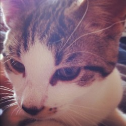 Tobi #cat #kitten #cute #close #face #kawaii  (Taken with instagram)