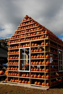 "Dream house. May rename blog ""At the Pumpkin House""."