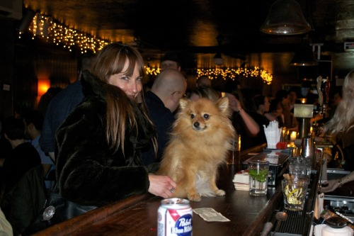 Rusty Dot, the Pomeranian, with his owner Christian of the New York band Bad Girlfriend at Zablozki's in Brooklyn.