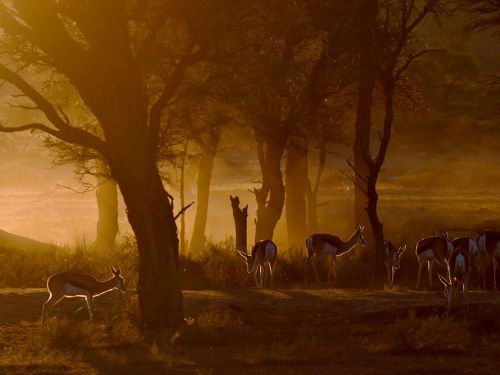 (via Springbok Picture – Animal Photo - National Geographic Photo of the Day)