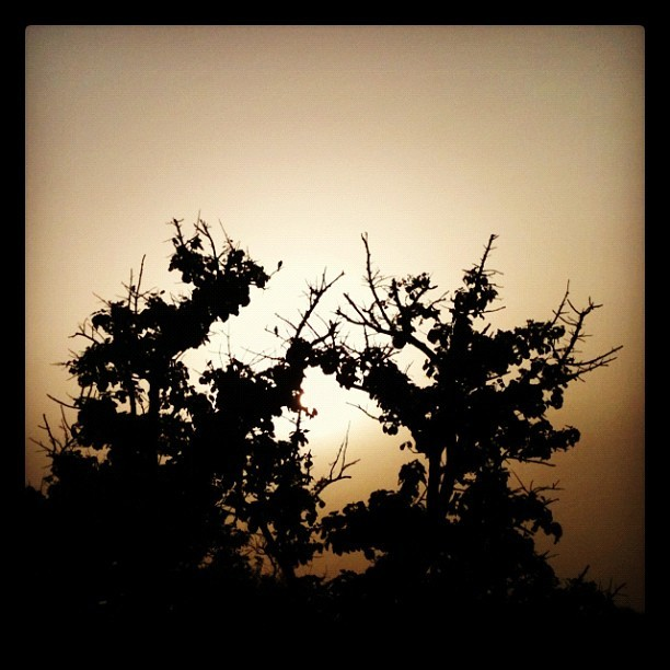 Spot the #Birds… #sunset #tree (Taken with instagram)