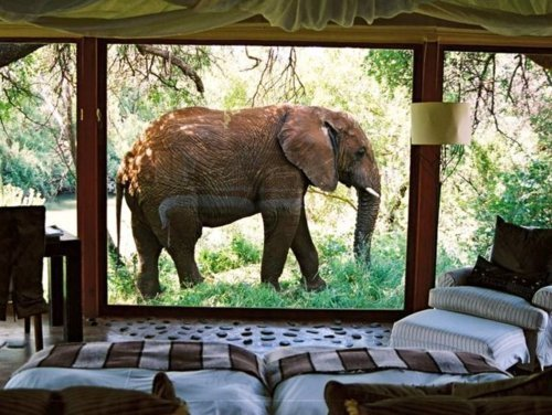 Write about the picture above. Why is there an elephant outside the window? Is it out of place, or do the owners of the house live in Africa? Try adding some comedy to the writing with frightened characters and witty dialogue. Do they try to interact with the elephant?