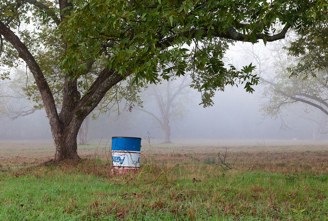 Barrel Under the Pecan Tree, Flint, Texas.