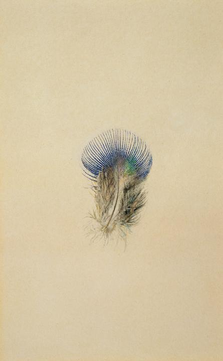 iamjapanese:  driade:  John Ruskin's study of a peacock feather, 1873.  More