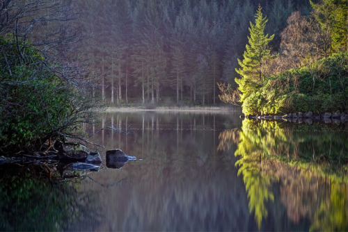 treeroots:  Loch Ard by ouldm01 on Flickr.