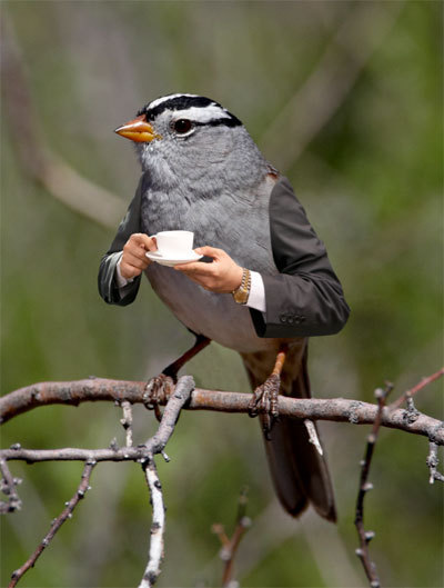 i say good bird, you must stop by my nest for a spot of tea and worm scones
