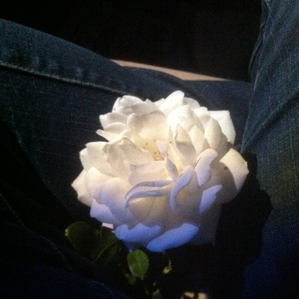 Brenda gave me a #rose. How #sweet, heheh. :3 #best #friend #bestfriend #flower #floral #friendship #instagram #tangerinepaws #heartache #heartbreak #gay #lesbian #boy #girl #brenda #chino #chinohills #hills #cali #socal (Taken with instagram)