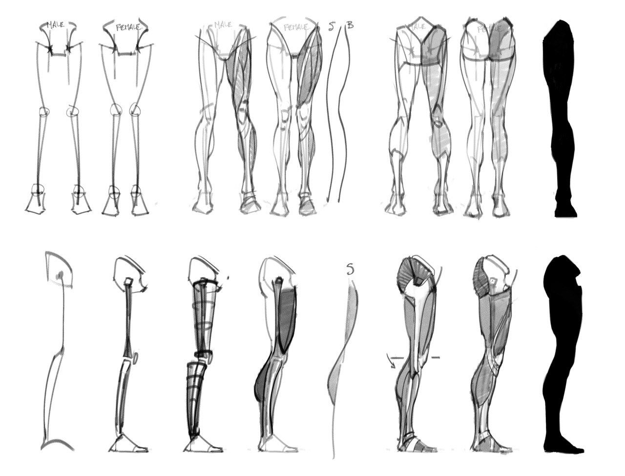 human-proportions:  From: pachurz:  Some building block references my Life Drawing teacher drew up for us for our Figure Drawing class. Thought I would impart the wisdom.