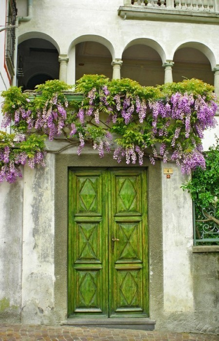 Let's repost the green and wisteria wonder