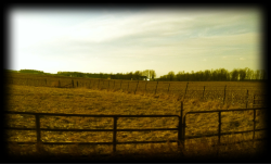 Country roads in Indiana are one of my favorite things.
