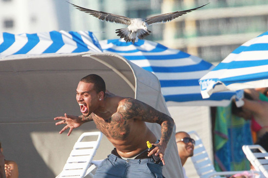 sle4zy:  Chris Brown gets attacked by a seagull  or chris brown is an animorph and just resumed his human form after spending all morning eating french fries off of the ground
