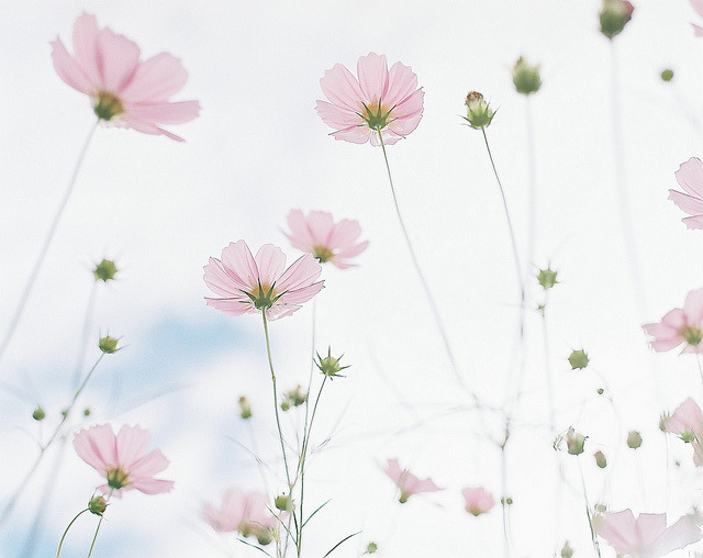 *cosmos by fangchun15 on Flickr.