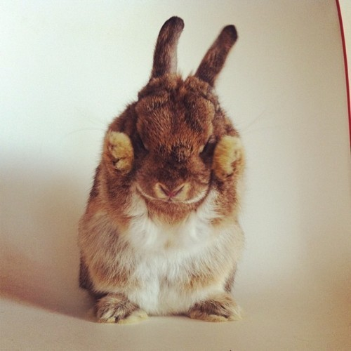 frankly-artless:  lately I consider bunnies cuter than kittens