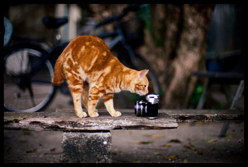 Cat vs Vintage Camera by L e f t y on Flickr.