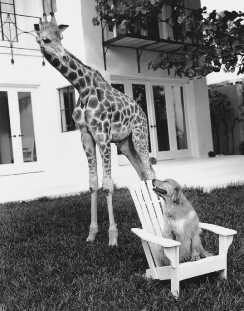 This is also representative of my relationship with giraffes. (Via Vanity Fair.)