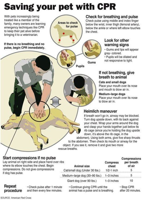 Save your animal friends with CPR!