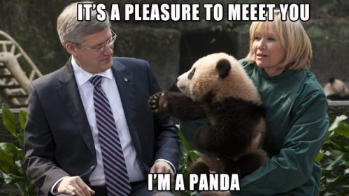 "LOL Stephen Harper's going ""WTF?"" in his usual robotic way."