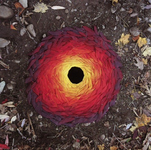 i-m-a-ge:  cavetocanvas:  Andy Goldsworthy, Sumach leaves / laid around a hole, 1998  Andy Goldsworthy is kinda the shit when it comes to Earth Art. True Story.