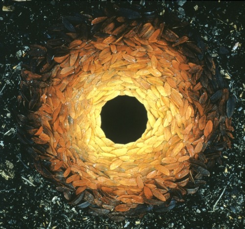 cavetocanvas:  Andy Goldsworthy, Rowan Leaves Around A Hole, 1987