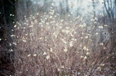 mykindafairytalee:  untitled by melancholija on Flickr.