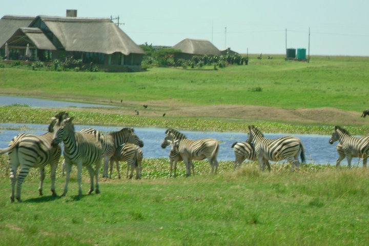 South Africa safari, near PMB. It was wonderful and informational. I never had fun at the zoo and the safari trips made me realize why.