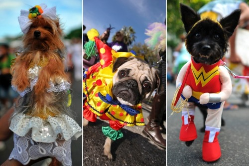 apsies:  Dogs on Parade at New Orleans's Mardi Gras and Rio's Carnival (PHOTOS) - The Daily Beast