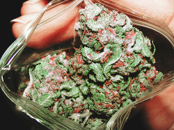 stoneddaily:  christmas colors