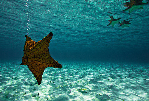 starfish / click for more