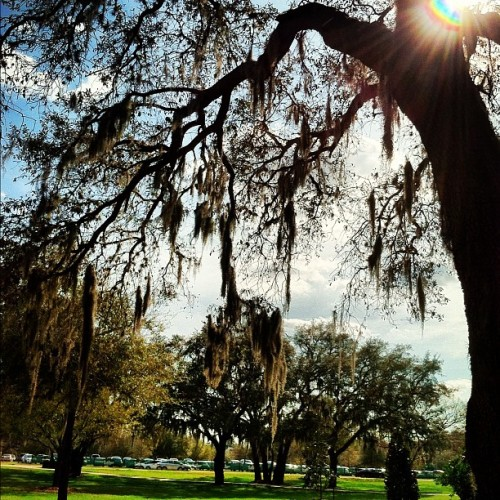 usflife:  Campus trees